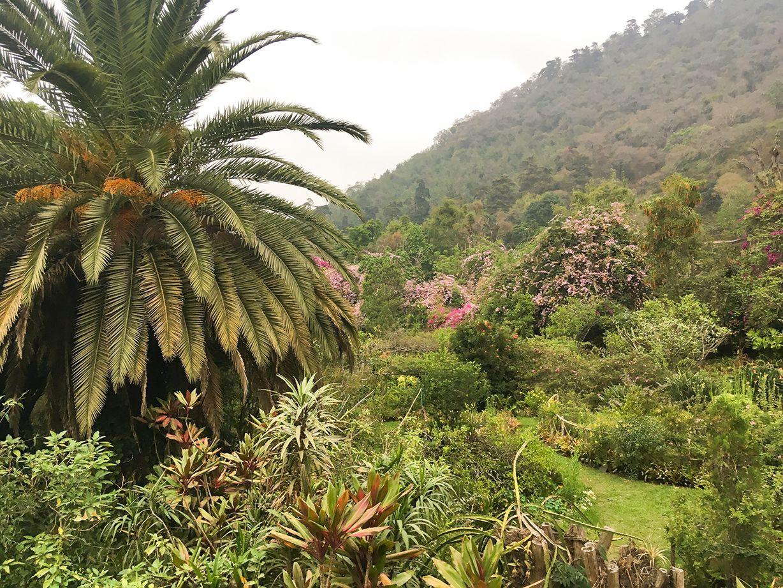 plantation_2-2.jpg