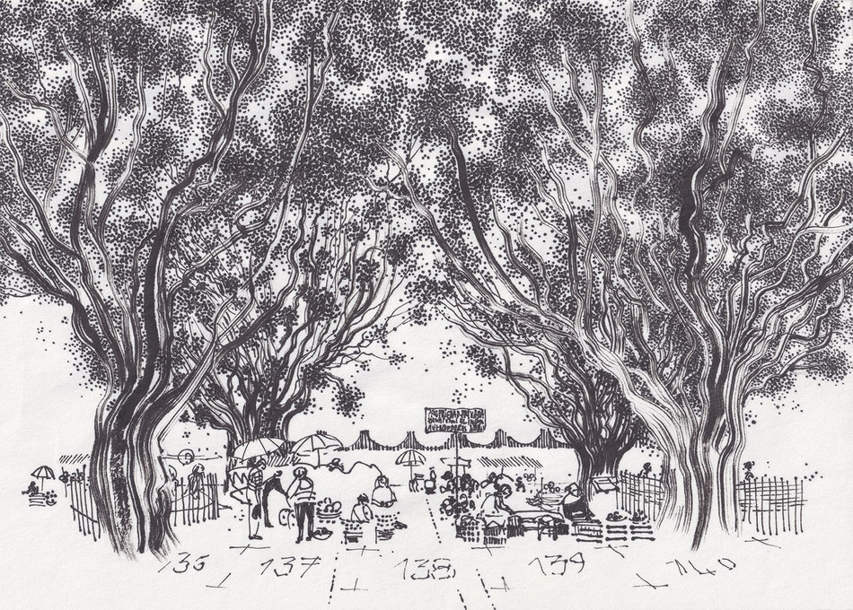 Sous les arbres impassibles