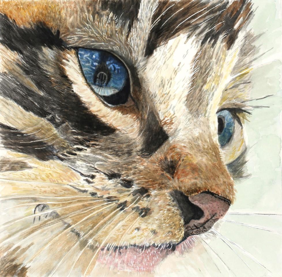 cat_maggiehart