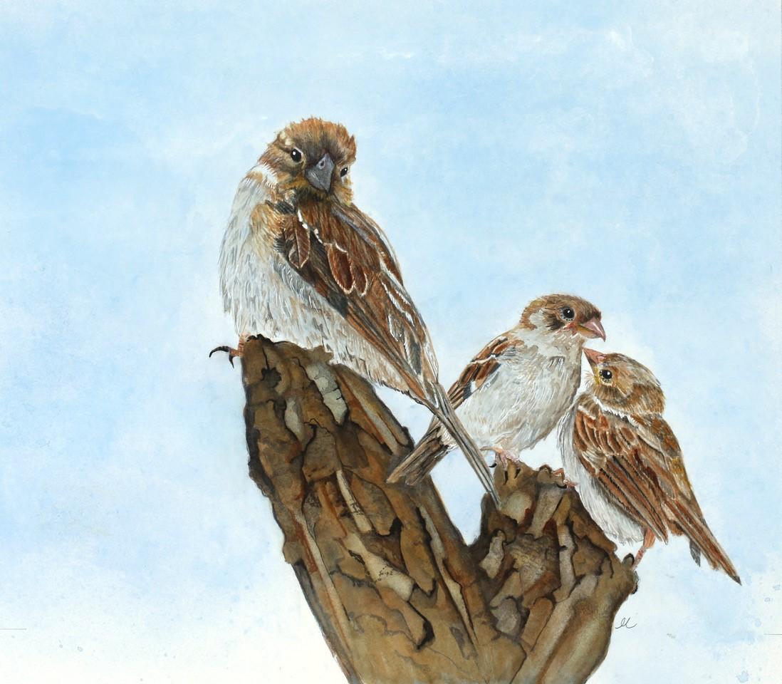 birds_maggiehart