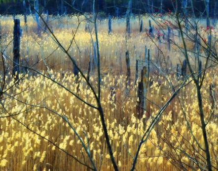 Evening Ionization - 1st Place Digitally Enhanced Photography