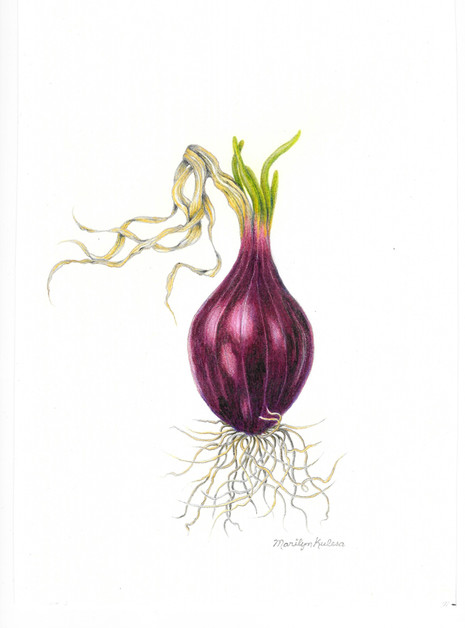 Red Onion -1st Place Drawing