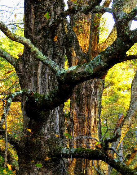 Autumnal Embrace - 1st Place Digitally Enhanced Photography