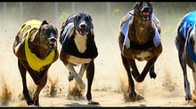 SIS Signs Greyhound rights deals