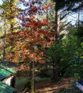 Bienvenido otoño!