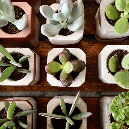industrial wedding inspiration, weding plants hire, leeds succulents
