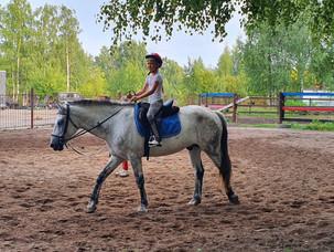 Мир лошадок