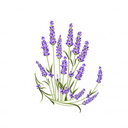 bunch-lavender-flowers-white_124093-15.j