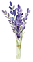 set-lavender-flowers-elements-collection
