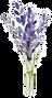 set-lavender-flowers-elements-collection