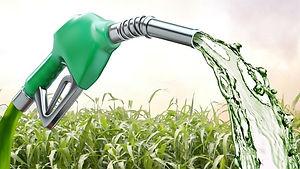 sorgo-etanol-txt-3501.jpg