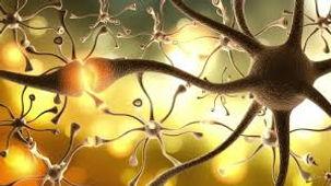 Cellules neuronales