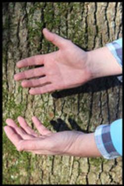 Au creux des mains