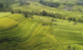 Rice Fields | Yoga Teacher Training Bali