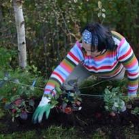 Kanthi - planting.jpg