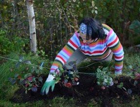 Planting og hagestell