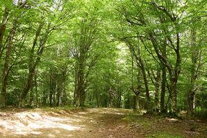 I boschi del Parco dei Nebrodi