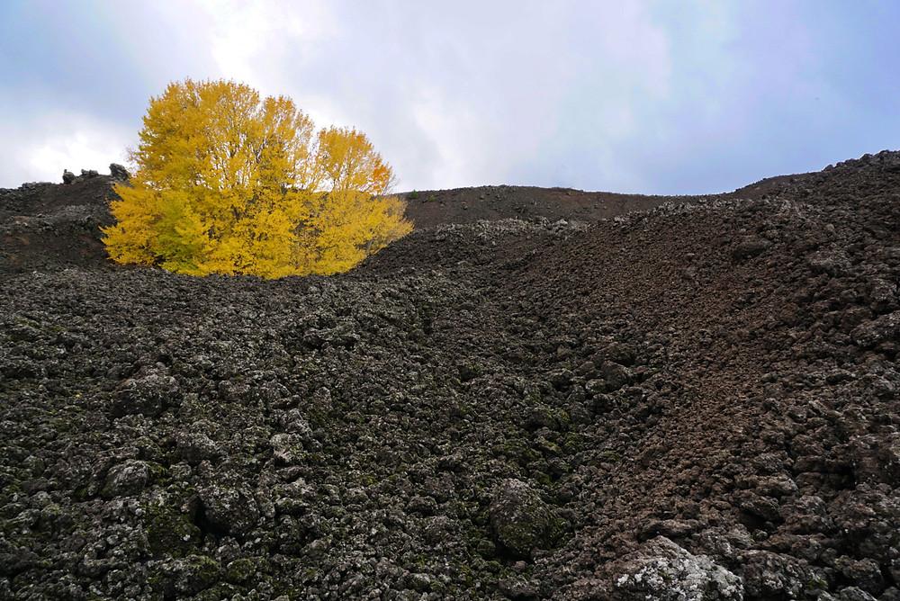 Sentiero dell'Etna, Randazzo. Visitare l'Etna
