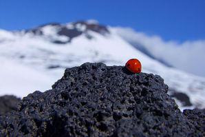 Coccinella dell'Etna, Weekend Etna sulla neve