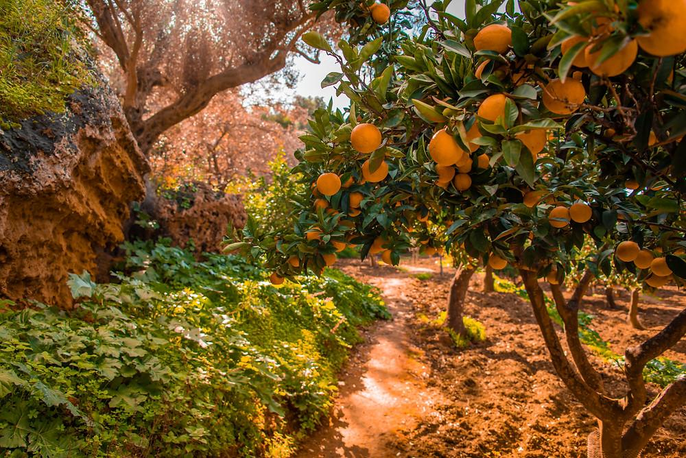 Giardino della Kolymbethra, cosa vedere ad Agrigento