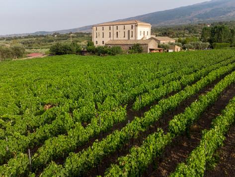 Feudo Vagliasindi: 200 anni di storia in un calice di vino