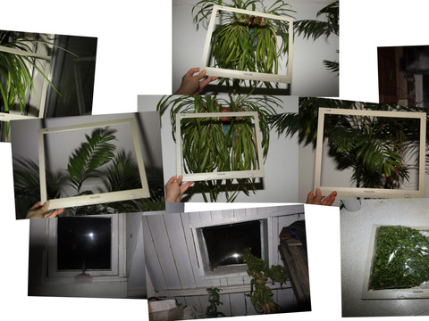 windows of windows photo collage plants.
