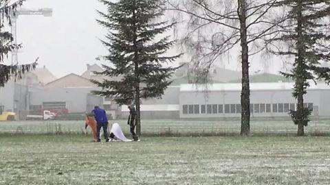 Igor`s Körung  Februar 2016
