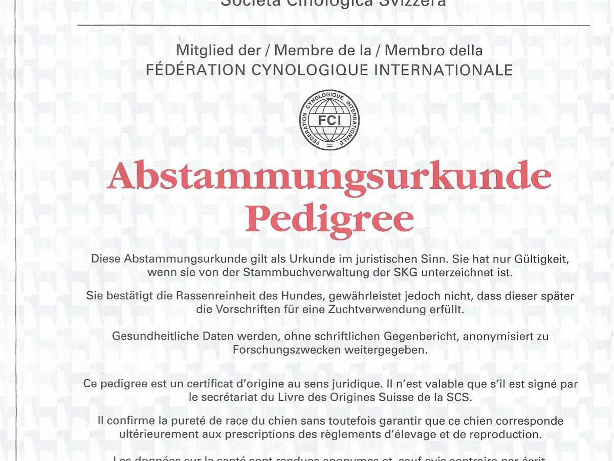 Igor%20Abstammungsurkunde_Page_1_edited.