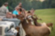 Safari-Tour-Elk-Full-300x200.png