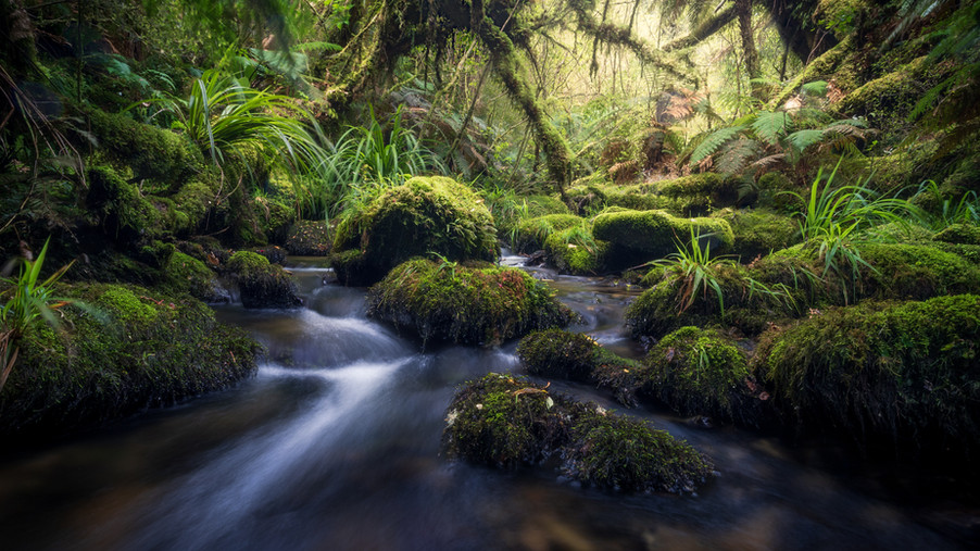forest-new-zealand