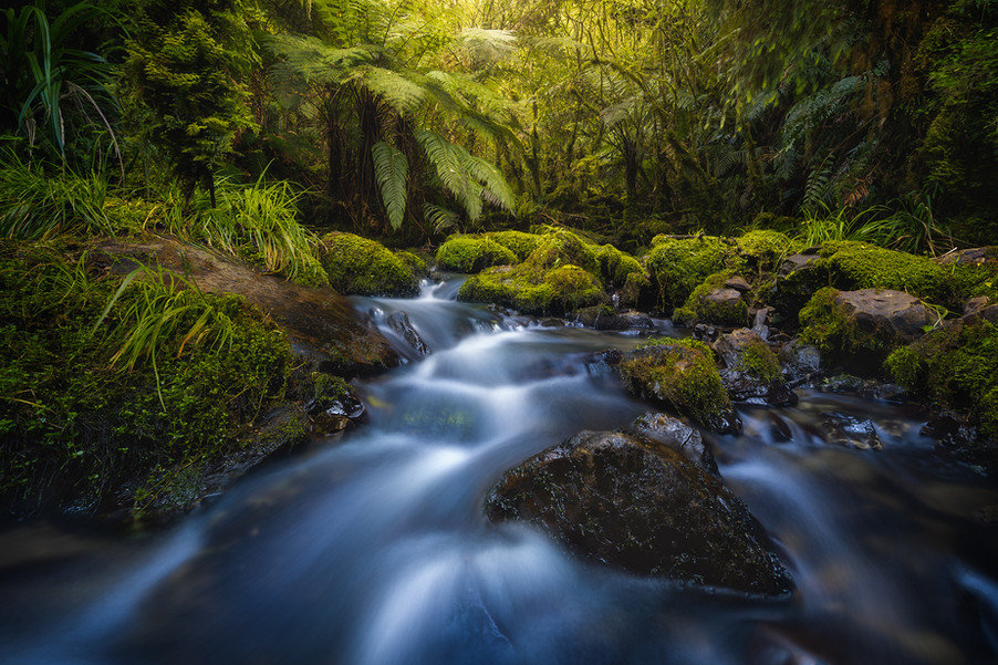 stream-in-the-forest