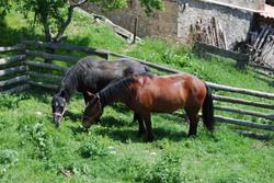 Ossera Cavalls