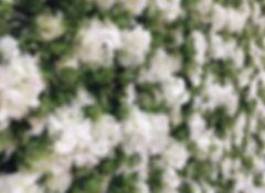 fullsizeoutput_134d.jpg