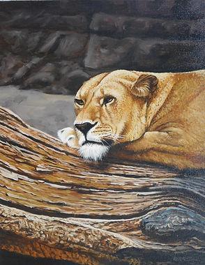 Alpha Lioness