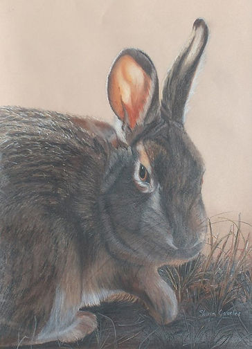 Rascally Rabbit