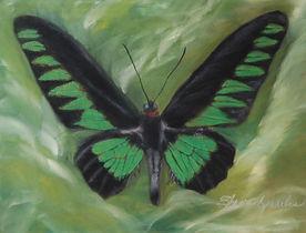 Trogonptera Brodiana Butterfly