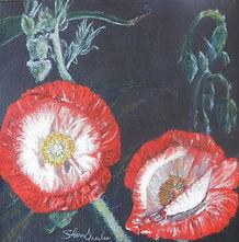 Wild Red Poppy