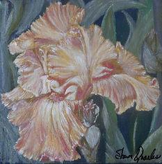 Glorietta Yellow Iris
