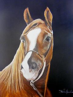 ForeverCzarsheik racing horse