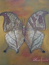 Salinas Femae Butterfly
