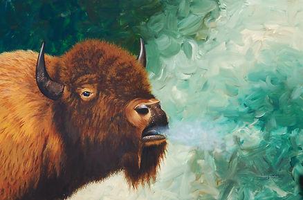 Amercan Bison Portrait
