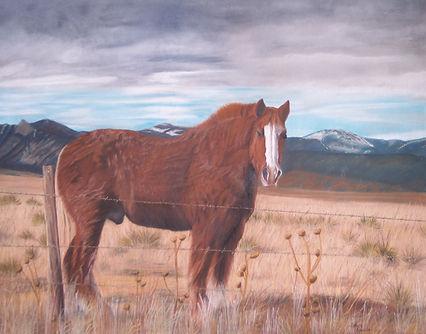 Halflinger horse at Old Santa Fe Trail Cemerron, New Mexico