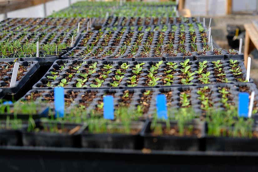Organic vegetables greenhouse regenerati