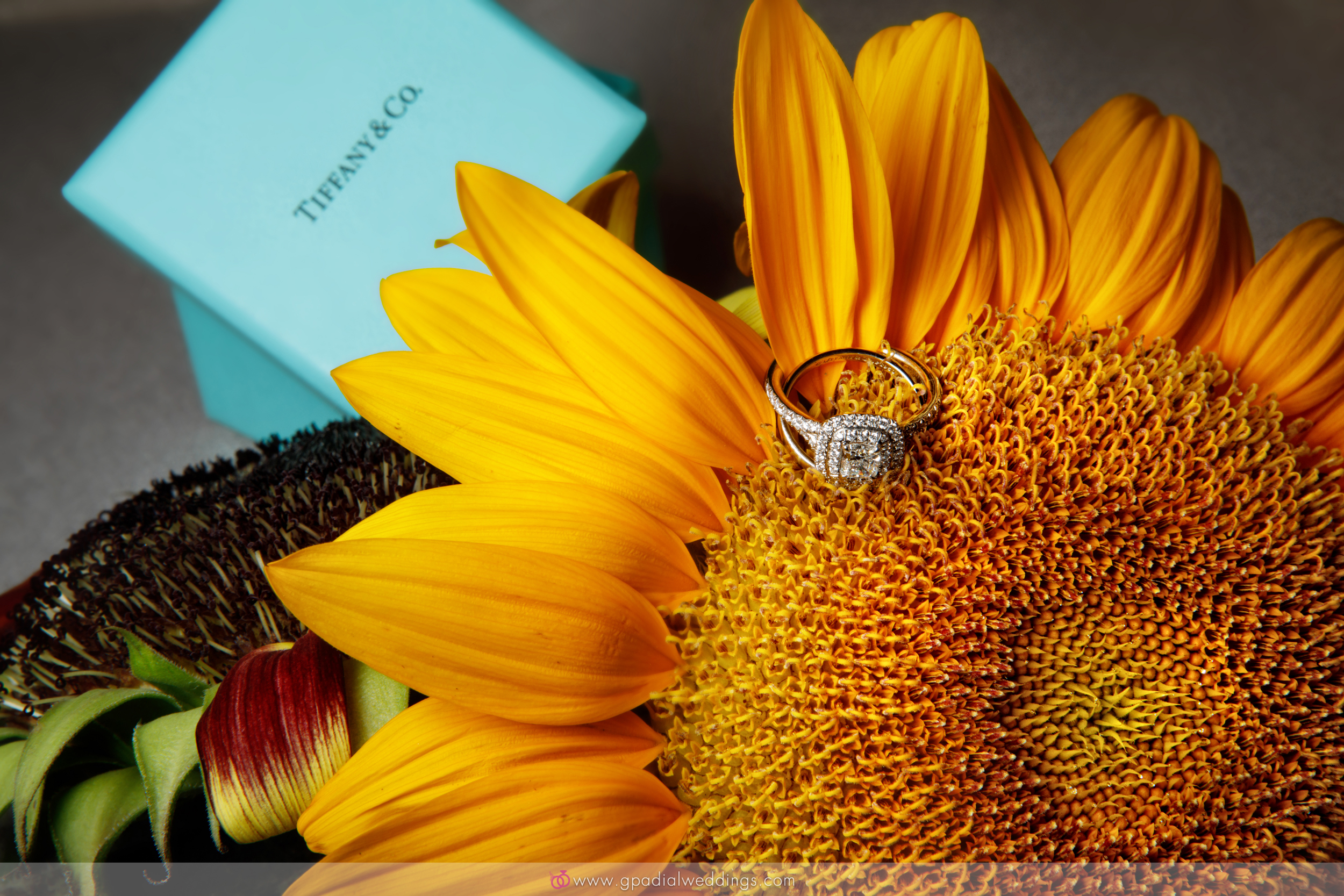 029___PADIAL_WEDDINGS_E_SESSIONS__©_2018