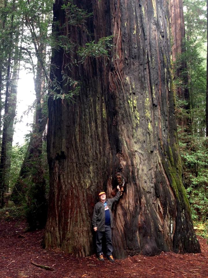 With the Elder Redwood
