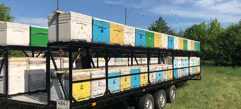 Кочевая пасека в Краснодарском крае, выехала на сбор майского мёда Акации 2020 г.