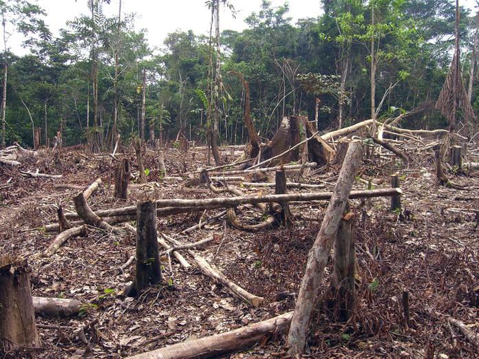 Foto: Matt Zimmerman - Desmatamento da Amazônia (Colômbia) / Ref. [F12.B]