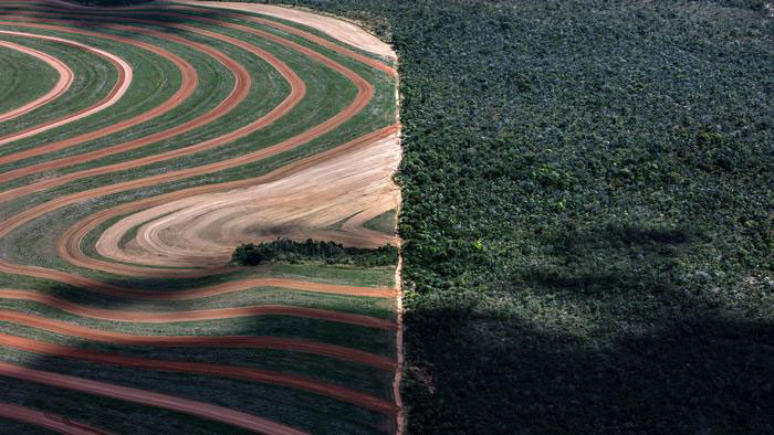 Foto: Marizilda Cruppe - Desmatamento da Amazônia (Mato Grosso, Brasil) / Ref. [F5]