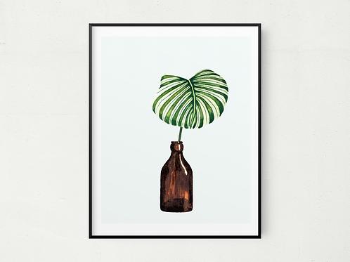 Bottled Leaf