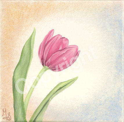 Tulip Medium Pink Stretched Canvas Giclee Print